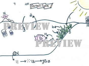 Marine Carbon Cycle - Ocean