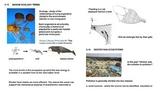 Marine Ecology - Ocean Unit 5 Bundled