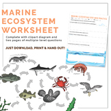 Marine Ecosystem Food Web Worksheet
