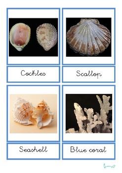 Marine Elements 3 part Montessori cards
