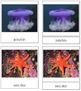 Marine Invertebrates: 3-Part Cards