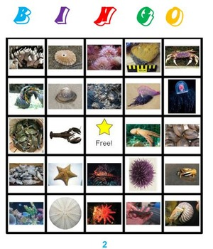 Marine Invertebrates Bingo