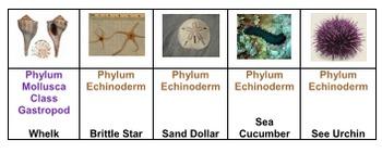 Marine  Invertebrates Tic Tac Know