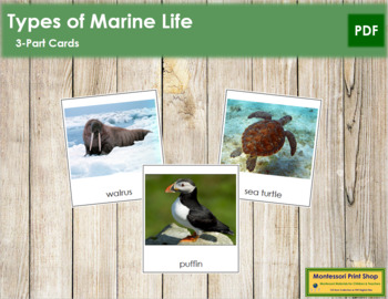 Marine Life: 3-Part Cards