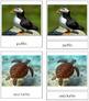 Marine Life: 3-Part Cards
