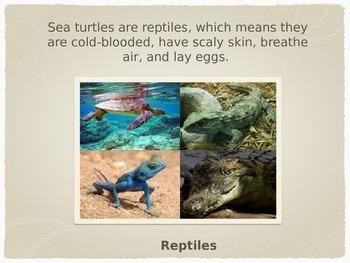 Marine Life:  Sea Turtles