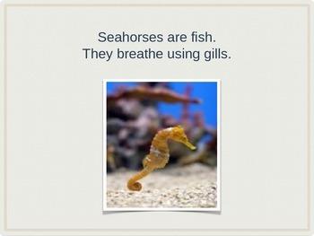 Marine Life:  Seahorses