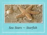 Marine Life:  Starfish or Sea Stars