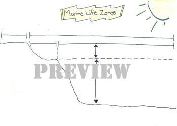 Marine Life Zones