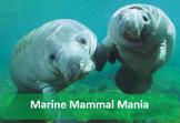 Marine Mammals Web Search for Print, TpT Digital Activity