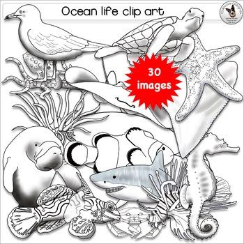 Marine, Ocean, Sea, Fish, Underwater and Tidepool Realistic Clip Art