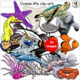 Marine, Ocean, Sea, Fish, Underwater and Tidepool Realisti