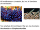 Marine Science - Chordates and Cartilaginous Fishes