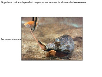 Marine Science - Food Webs in Actions