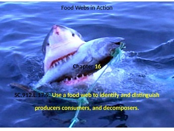 Marine Science - Food Webs in Actions