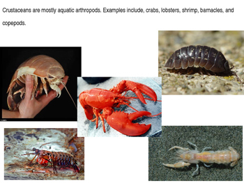 Marine Science - Introduction to Crustaceans and Echinoderms