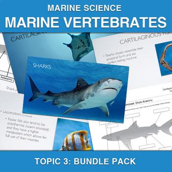 Marine Science: Marine Vertebrates