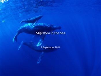 Marine Science - Migration