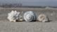 Marine Science: Mollusks