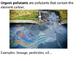 Marine Science - Ocean Pollution