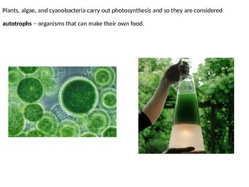 Marine Science - Photosynthesis and the Ocean