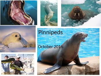 Marine Science - Pinnipeds