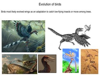 Marine Science - Seabirds