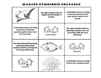 Marine Symbiosis