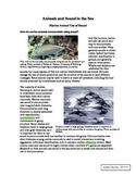 Marine animals use of sound (using Literacy standards!!)