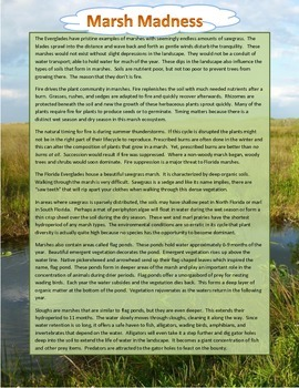 Marsh Madness - What are marshes?