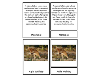 Marsupial Three Part Cards