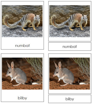 Marsupials: 3-Part Cards
