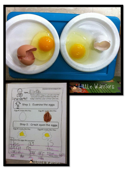 Martin Luther King Egg Experiment Response Sheet {MLK}