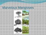 Marvelous Mangroves