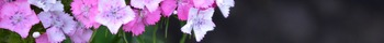 Photo Products - Mary's Garden Diathus Theme