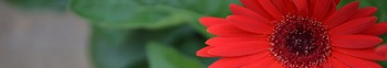 Photo Products - Mary's Garden Gerbera Daisies Theme
