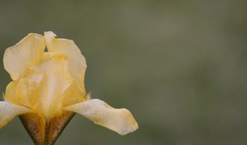 Photo Products - Mary's Garden Iris Theme