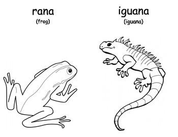 Mascotas (Pets) Coloring Booklet
