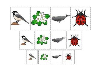 Massachusetts State Symbols themed Size Sorting. Printable Preschool Game.
