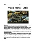 Mata Mata Turtle - Informational Article Facts Questions Vocabulary