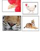 Match Animals Noses