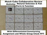 Match Cube Collaborative Review Game Fish Characteristic &
