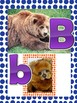 Match the capital letters with the lower-case letters.  Big Bear little bear