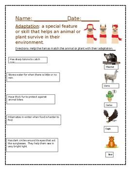 Matching Adaptation Worksheet Editable