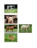 Matching Farm Animals