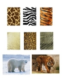 Matching Game - Safari Animal File Folder Game