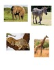 Matching Game - Safari Animal File Folder Game