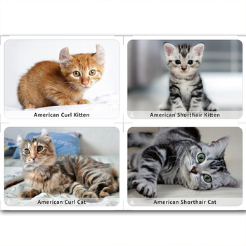 """Matching cards - """"Cats & Kittens"""""""