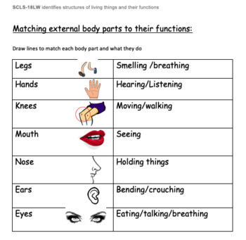 Matching external body parts to their functions. | TpT