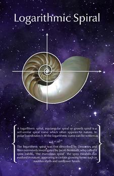 Math Poster - Logarithmic Spiral